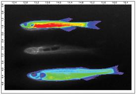 gloFish1_4w (1)